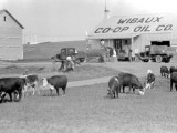 Wibaux Co Op Oil